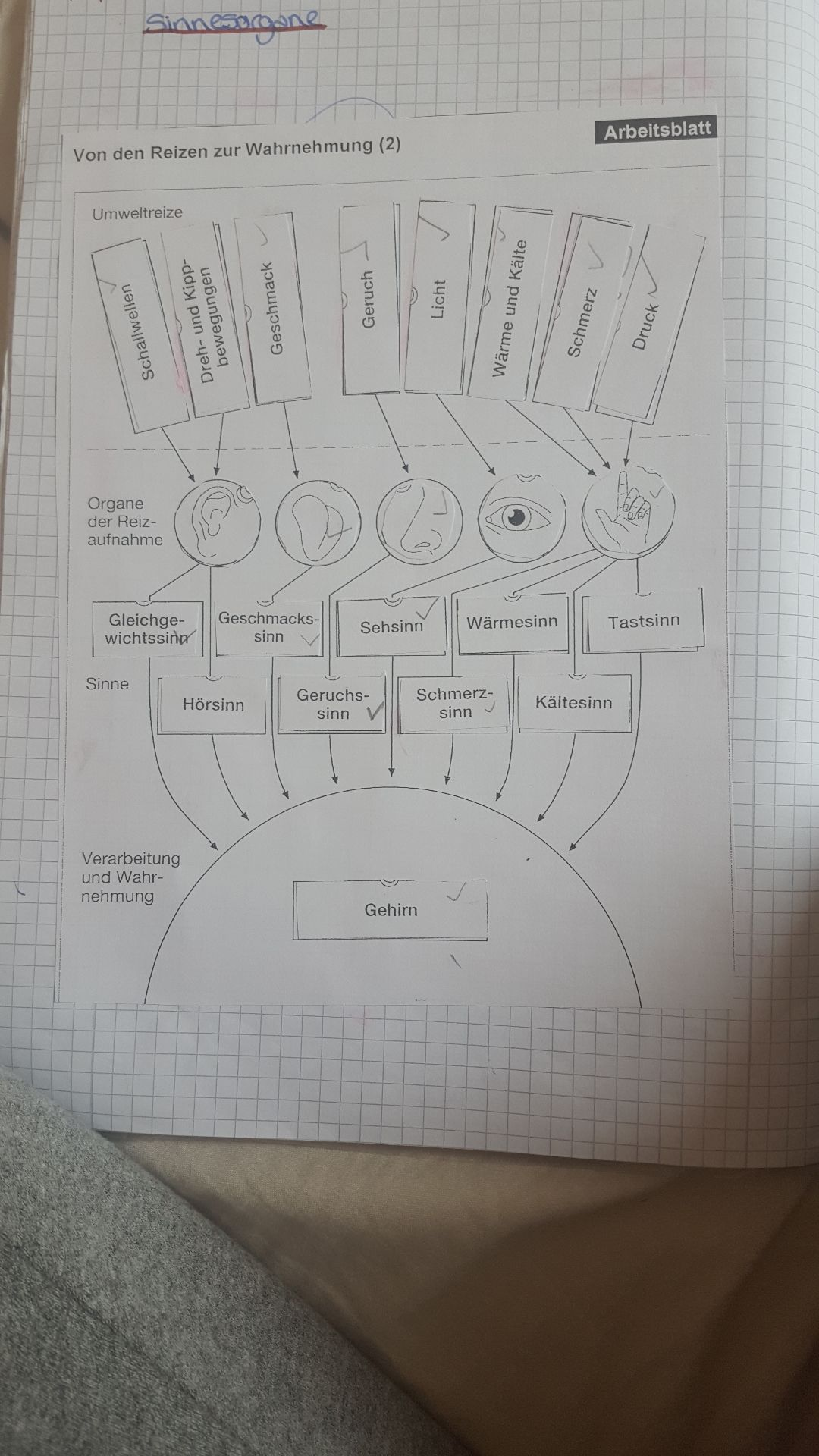 biologie nervensystem | GoStudent